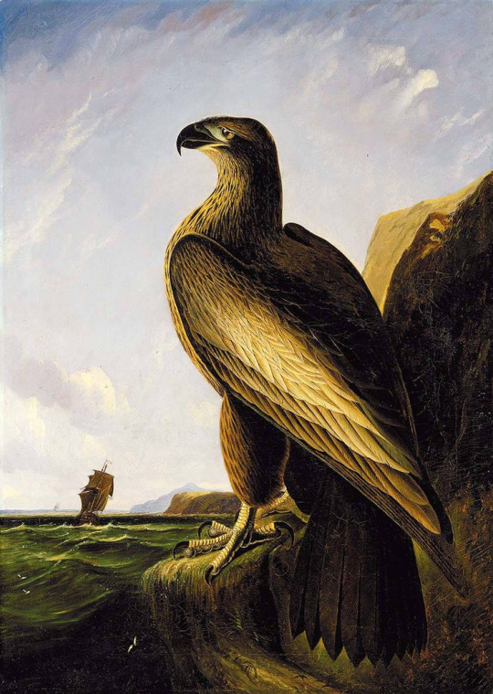 washingtons eagle.jpg