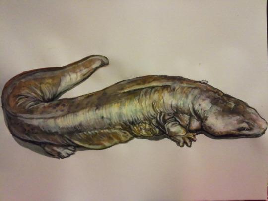 canadian alligator.jpg