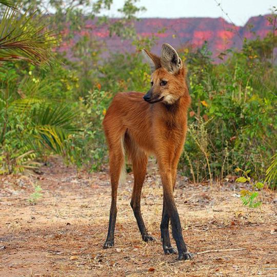 wolf deer.jpg
