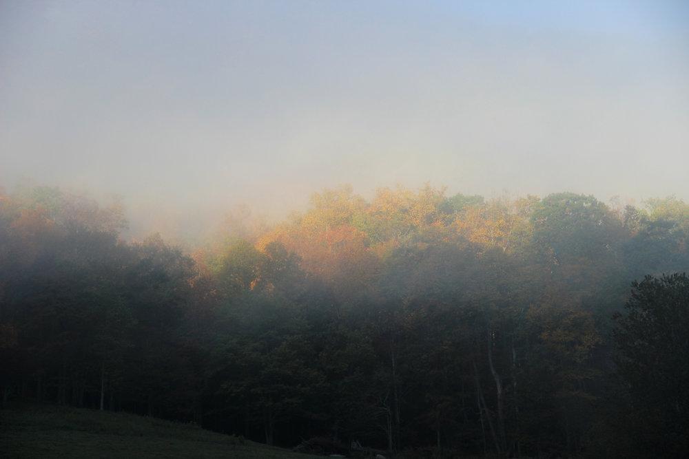 Autumn morning by Michael.jpg