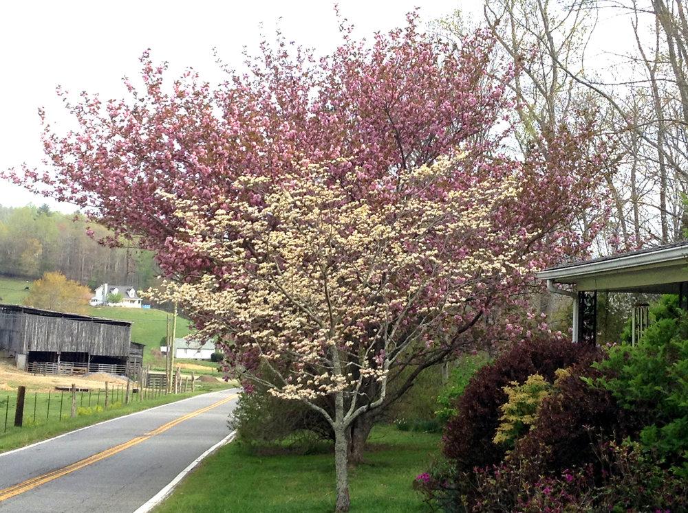 Spring in our yardIMG_1071.jpg