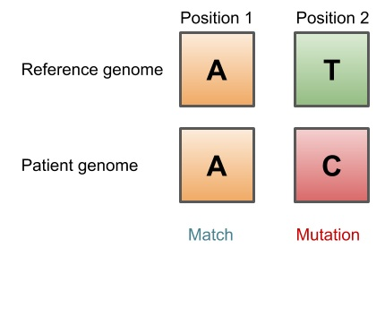 Figure 1. Comparing a reference genome to the genome of an individual.
