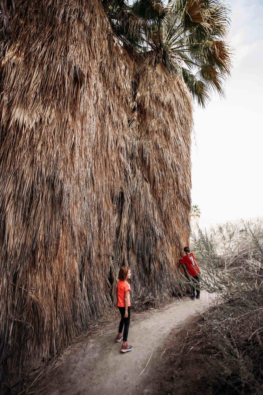Coachella Valley Preserve00015.jpeg