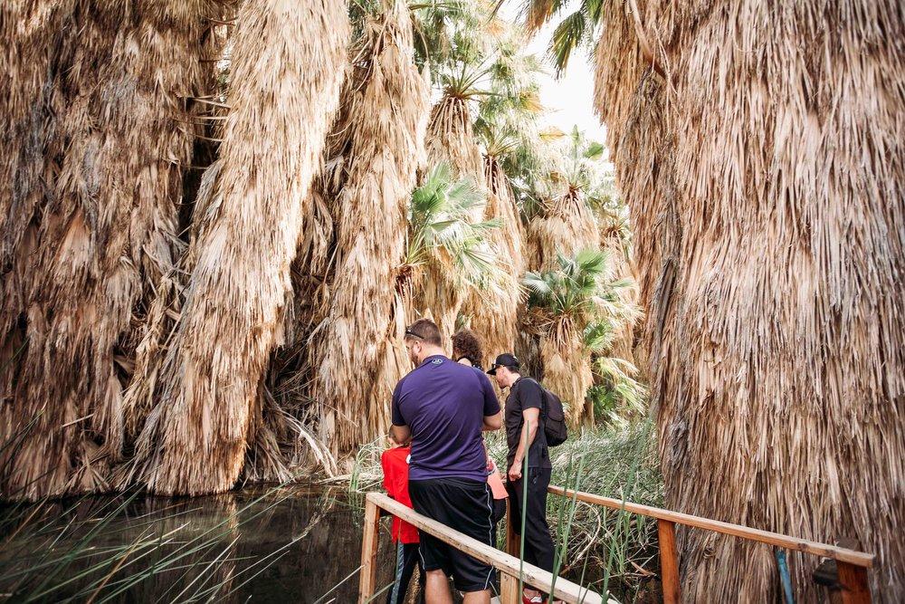 Coachella Valley Preserve00017.jpeg