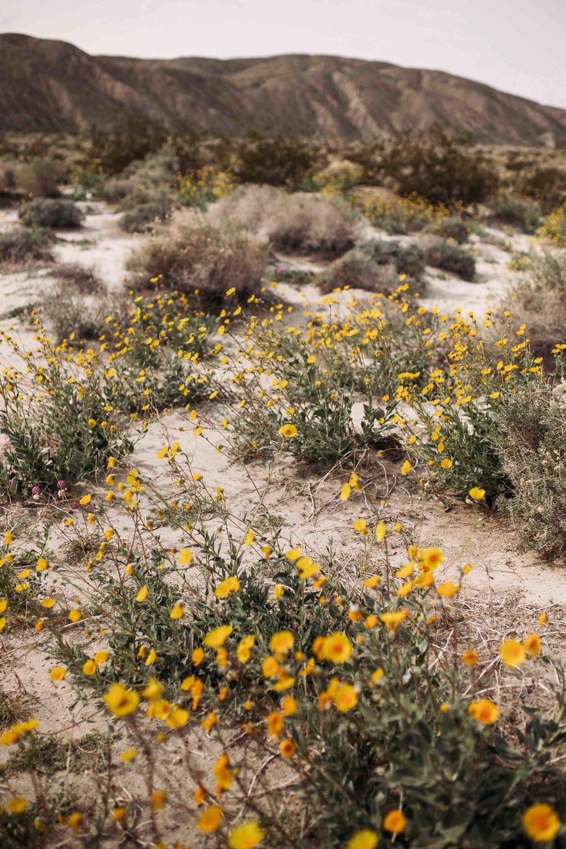 Coachella Valley Preserve00021.jpeg