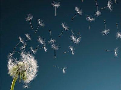 dandelionclouds.jpg
