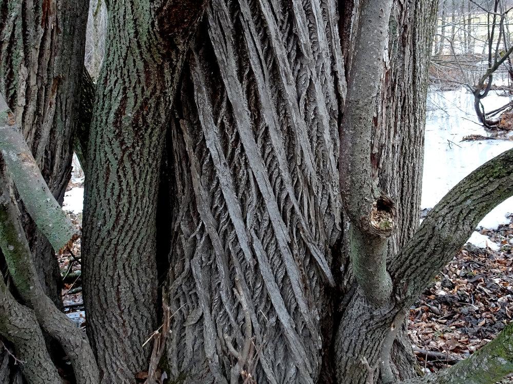 bark-1500px.jpg