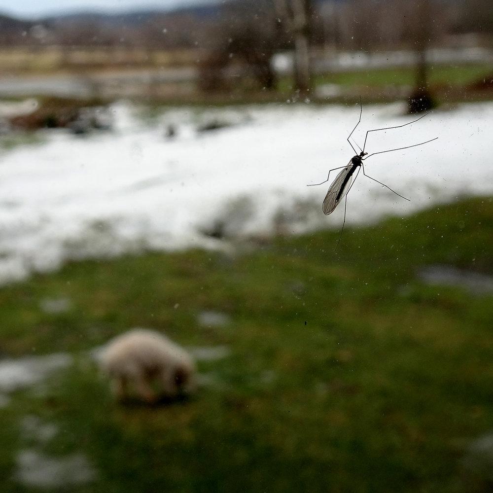mosquito-fb.jpg