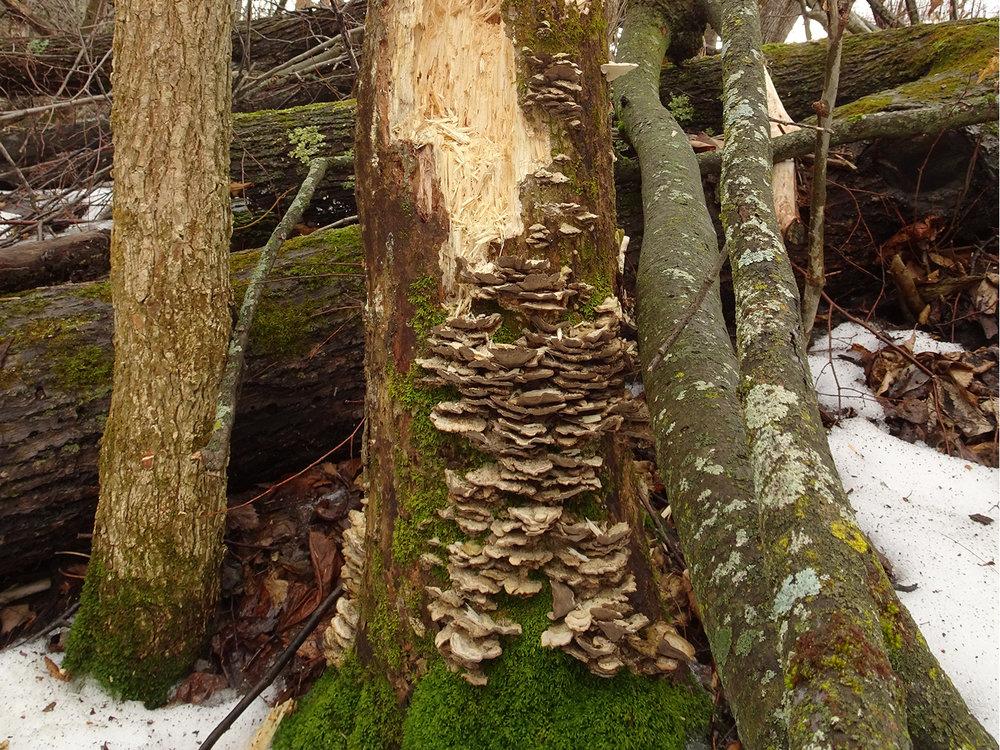 mushrooms-1500px.jpg