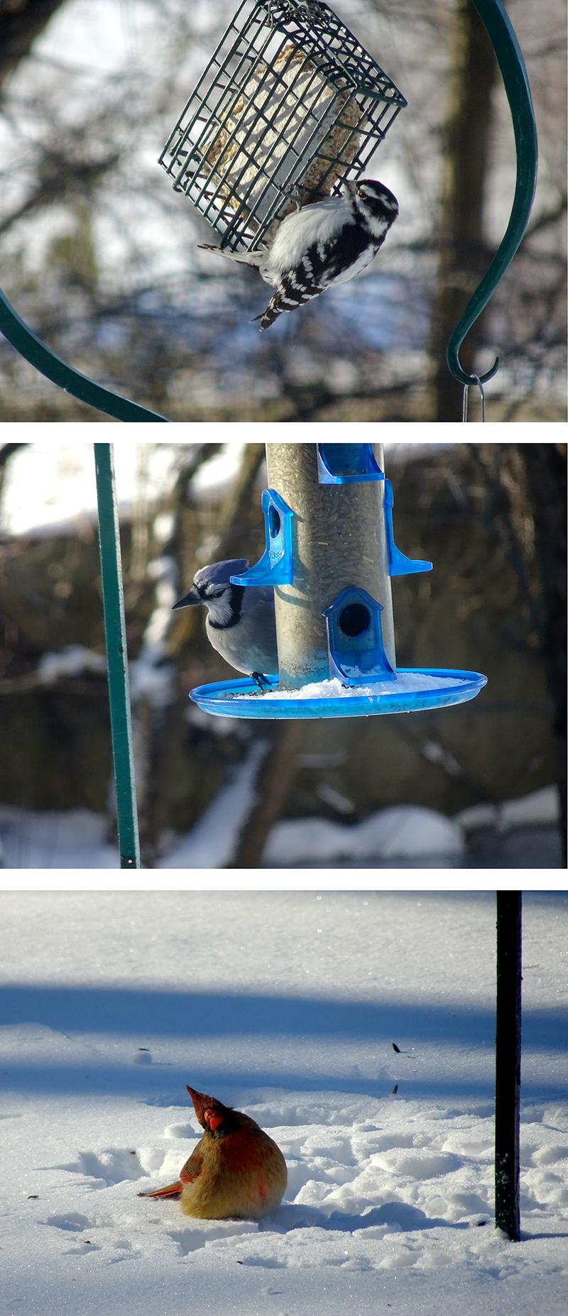 birds-800px