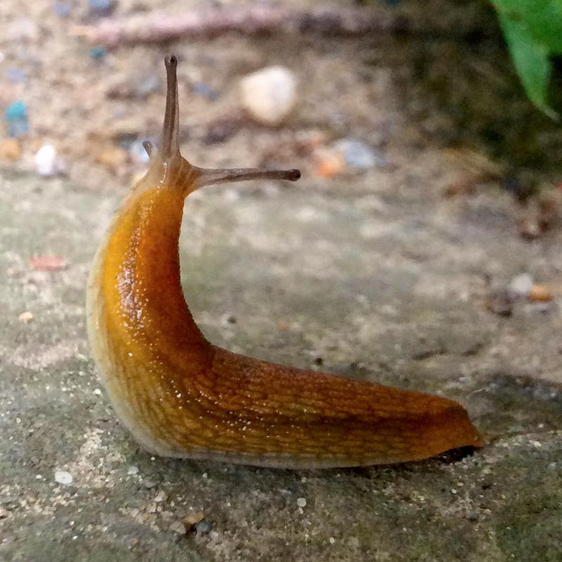 slug-800px