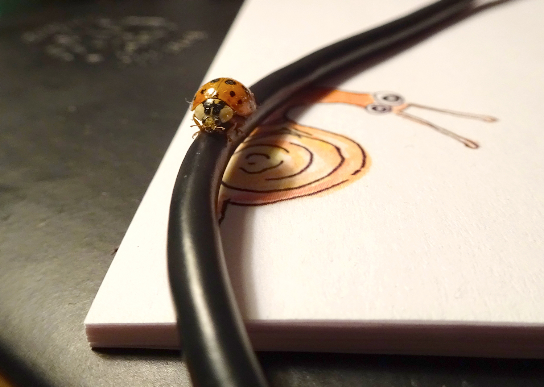 muse-ladybug-1500px