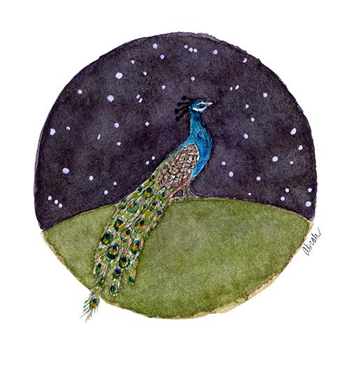 ss-peacock