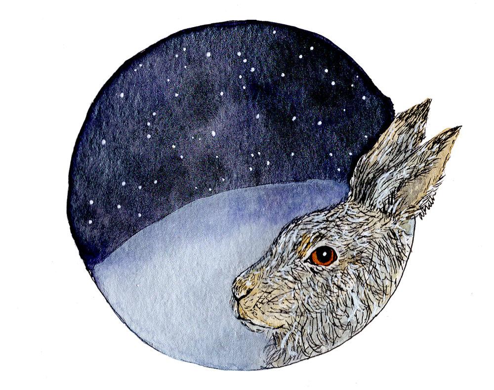 hare-stars002.jpg