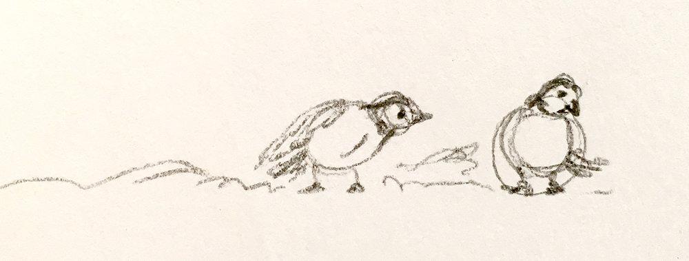 birds-02.jpeg