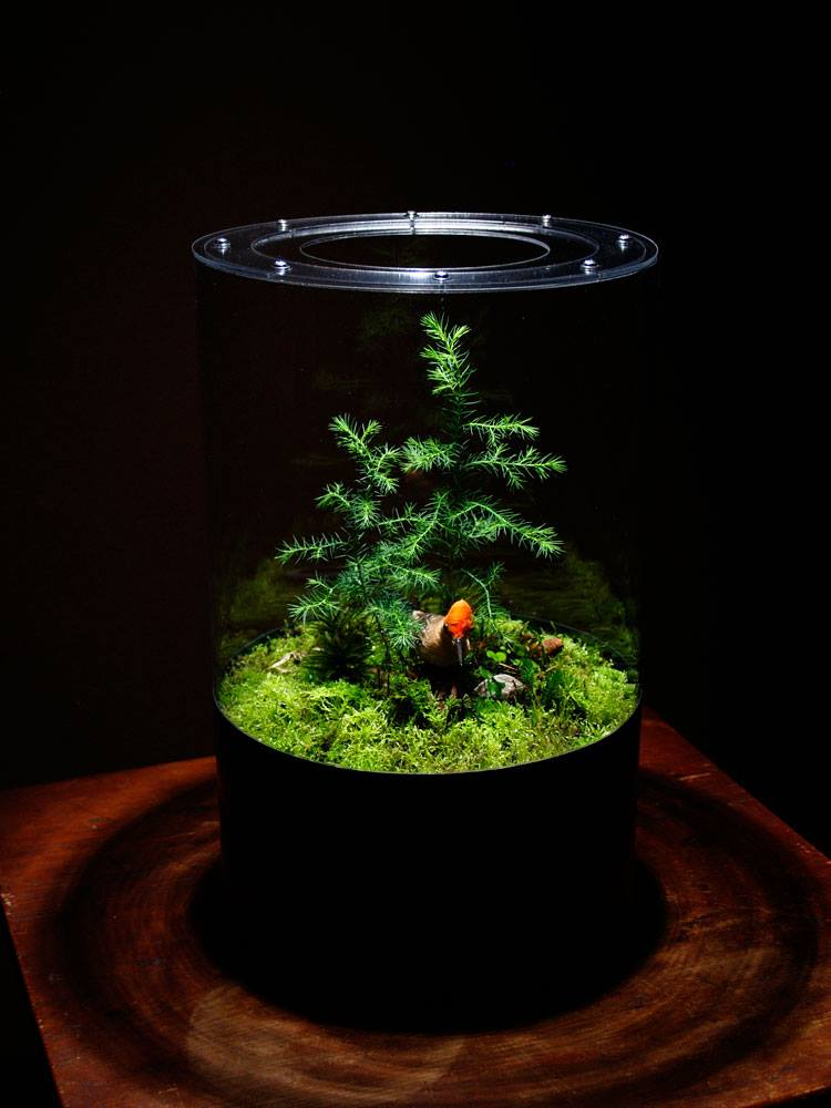 Mossery Planted Vase