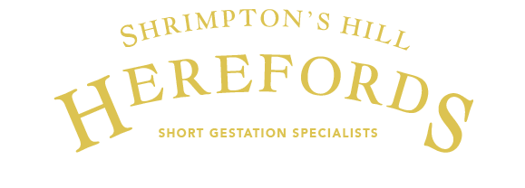 Shrimpton's Hill Herefords