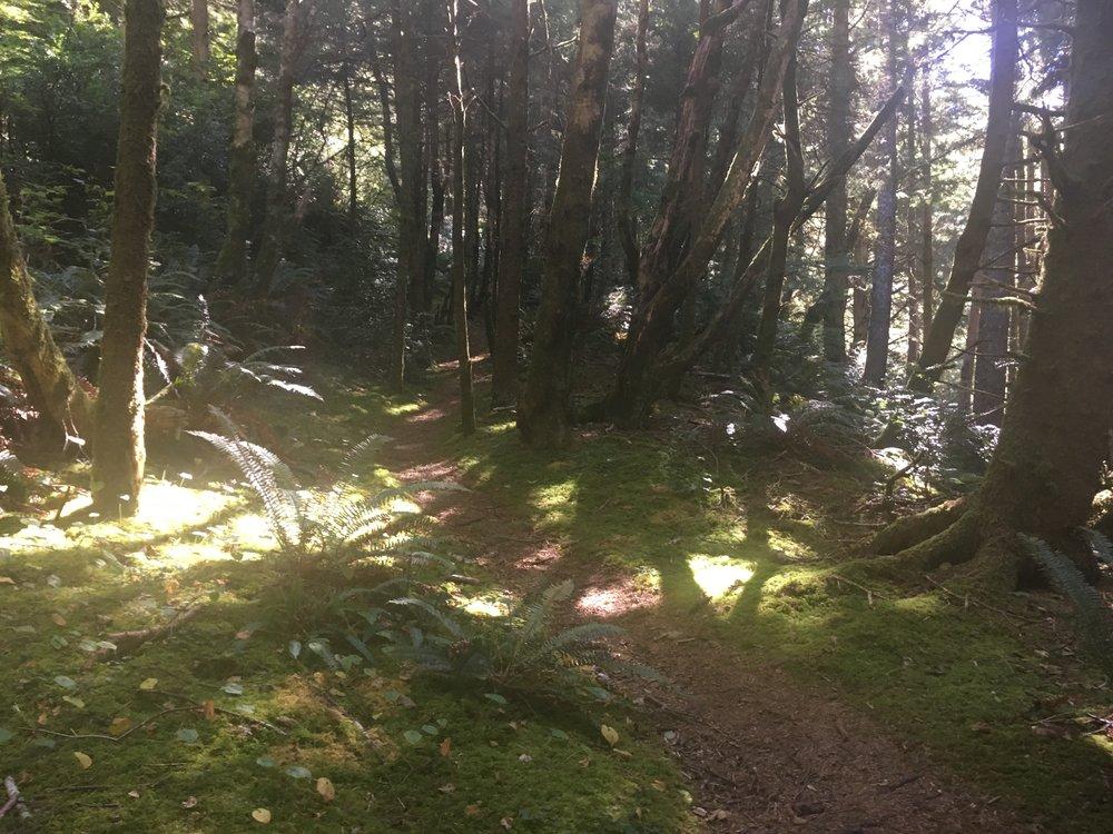 Trail Up Cape Perpetua
