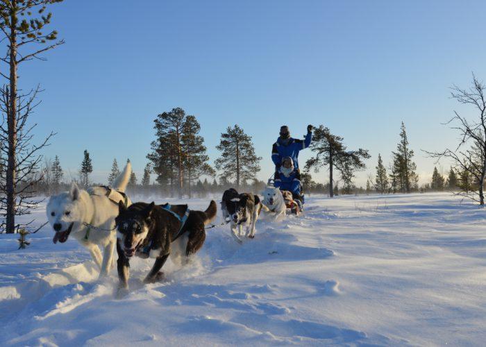 Kiruna-Husky-Daytour--700x500.jpg