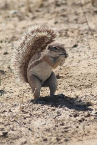 ground-squirrel.jpg.rb_-200x300.jpg