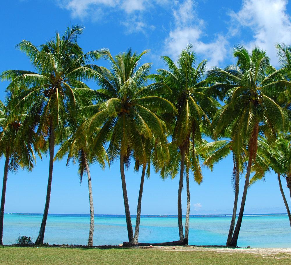 palm-trees-beach.jpg