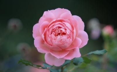 5d352-blossom.jpeg