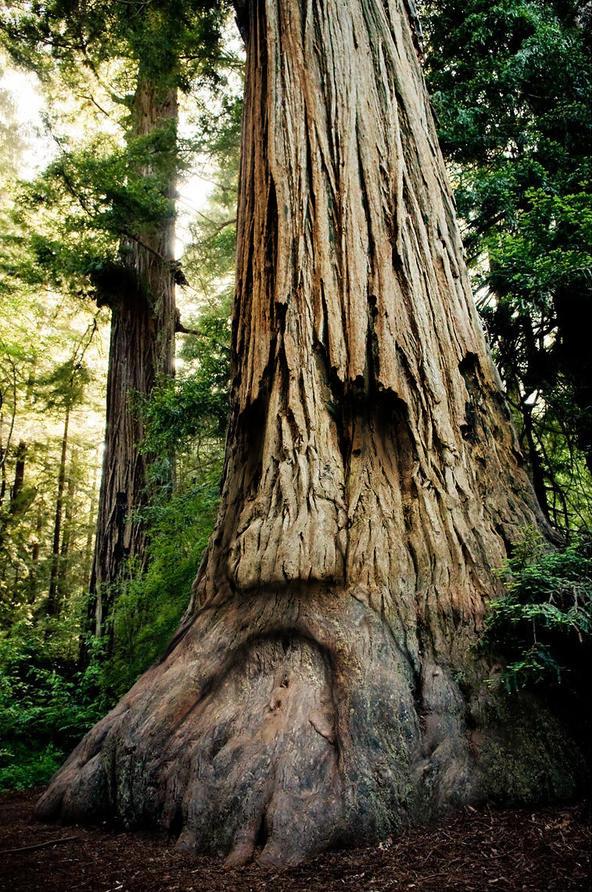 zelda-tree.jpg