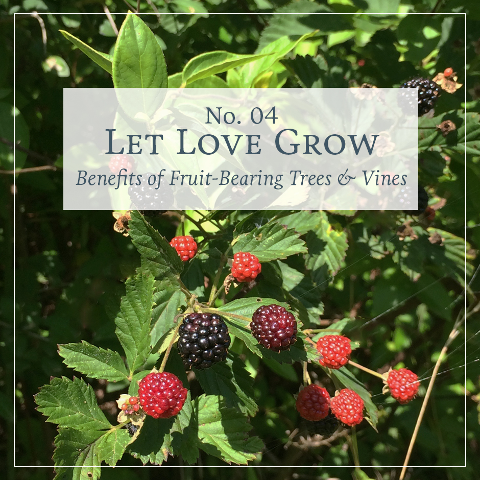 Let Love Grow: Benefits of Fruit-Bearing Trees & Vines