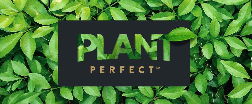 Plant-Leaves.jpg