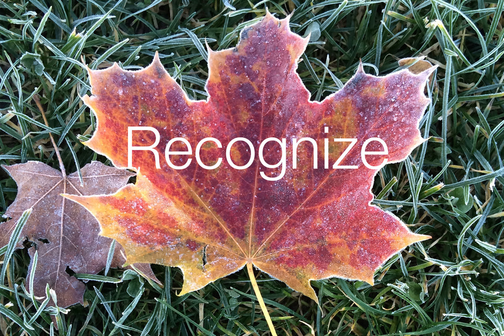 Recognize-Autumn-leaf.jpg