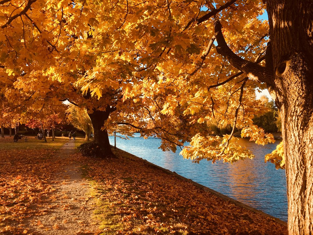 autumntree-fred-russo-428748-unsplash.jpg