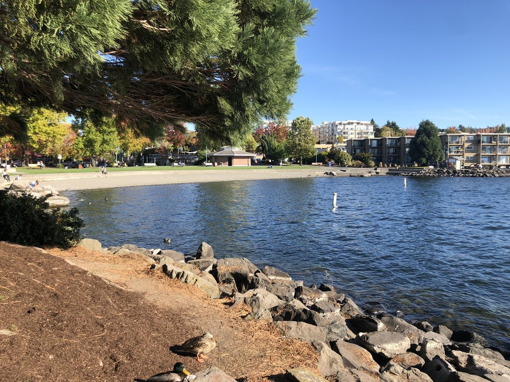Outdoor Activities - Marina Park - Downtown Kirkland