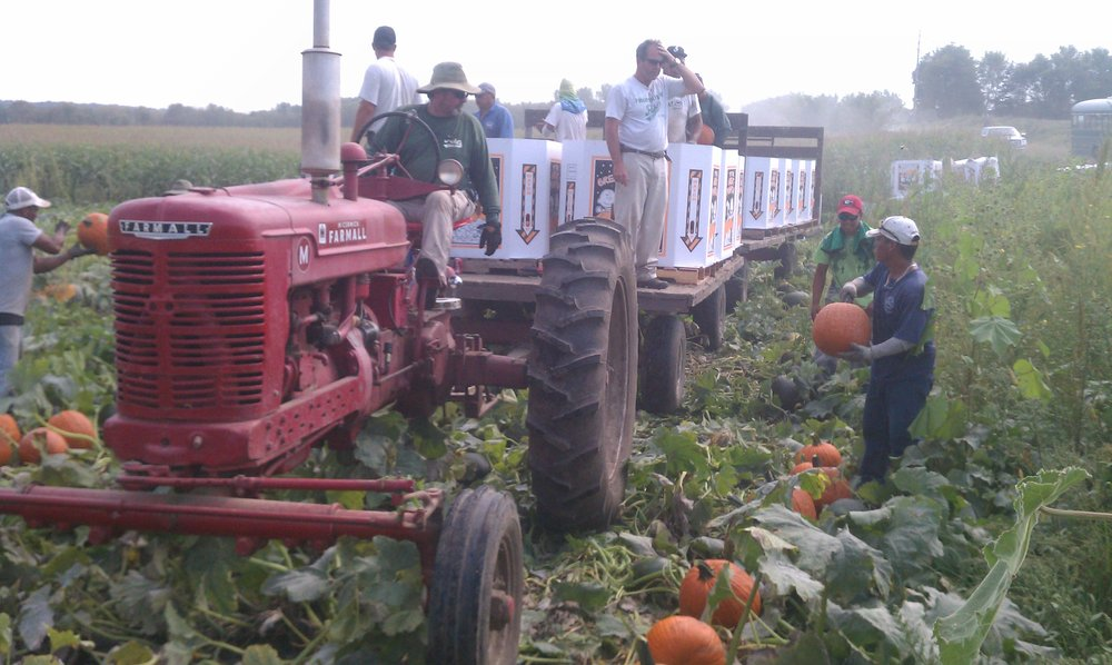 pumpkins_23966113867_o.jpg