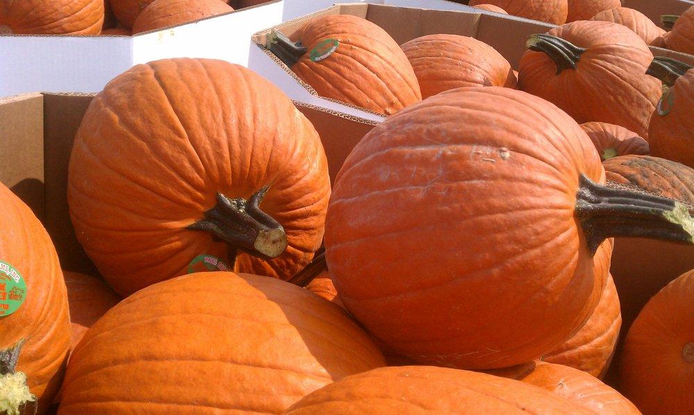 pumpkins_38114744554_o.jpg