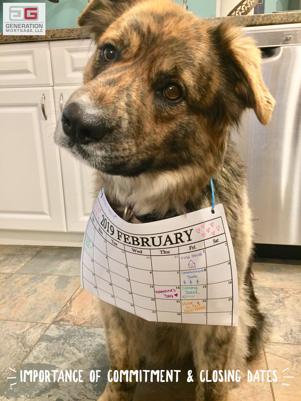 Puppy modeling a calendar that shows the important dates during purchasing a home, such as the commitment and closing dates.