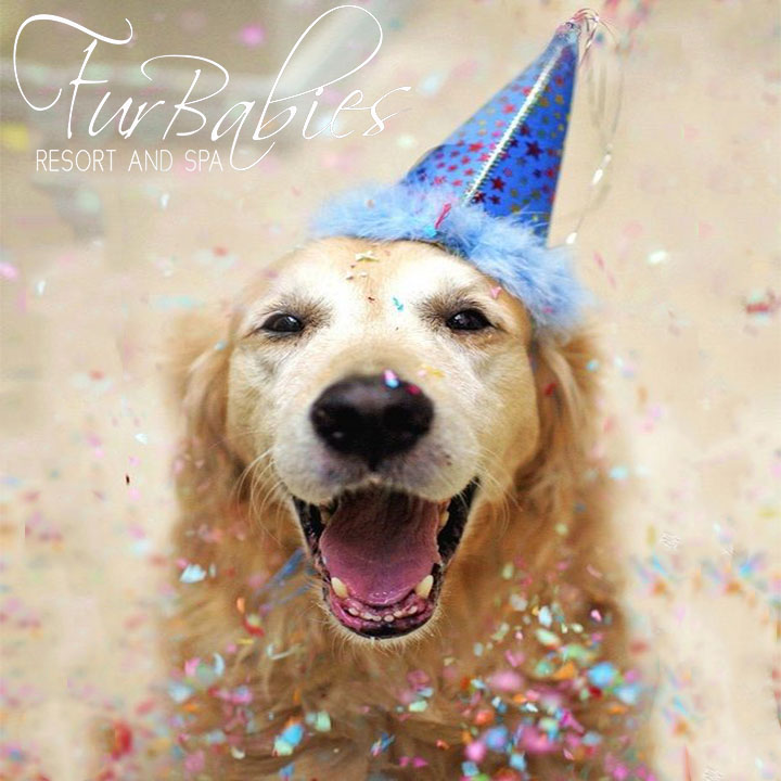 FurBabies Resort and Spa Dog Birthday Party
