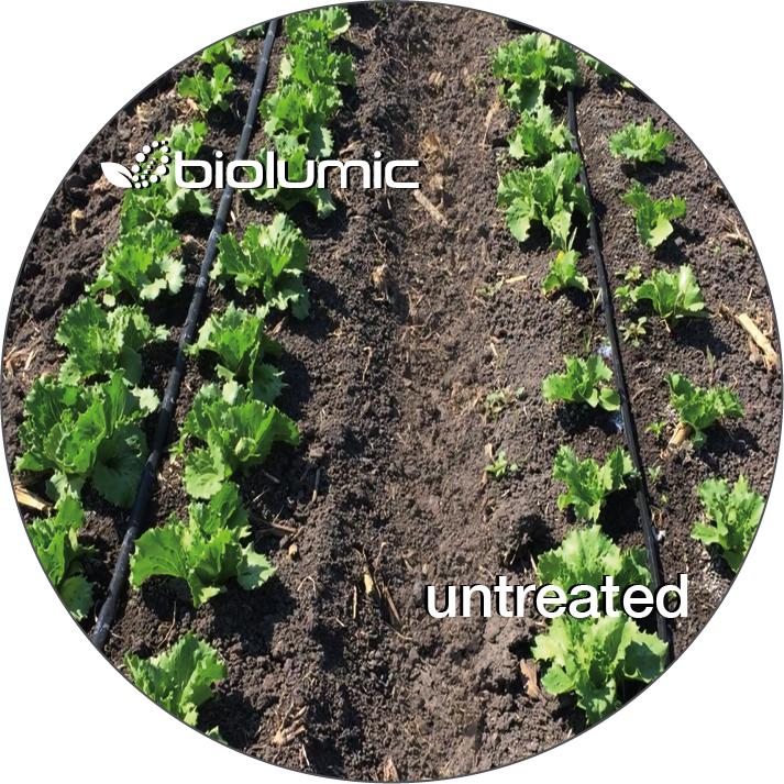 seed treatment diagram 3.jpg