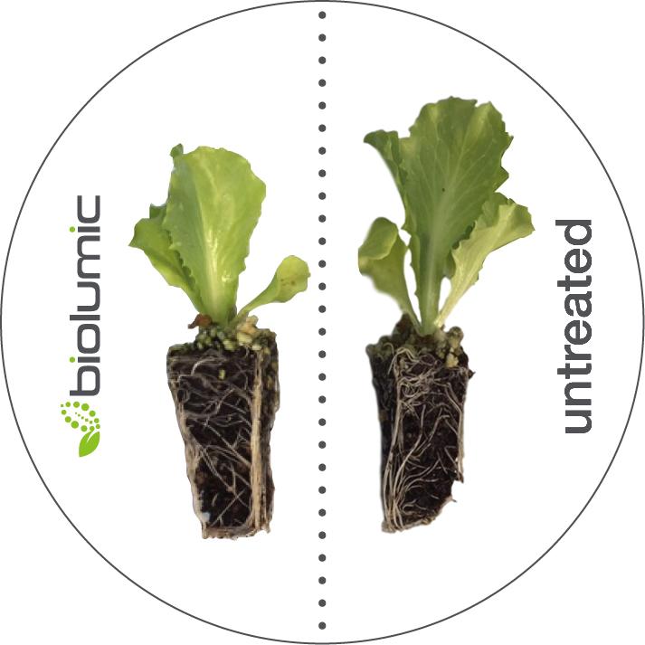seed treatment diagram 2.jpg