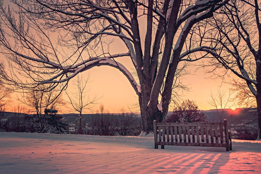 branches-dawn-dusk-374.jpg