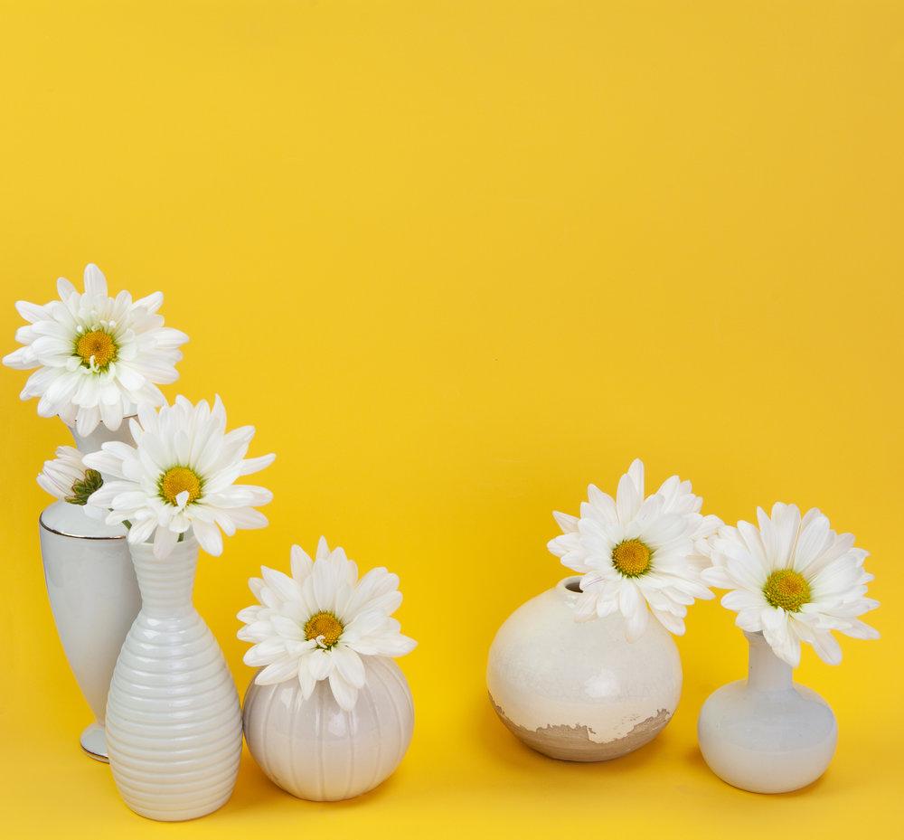 yellow daisies 2.jpg