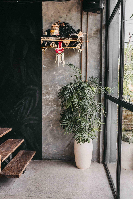 keira-mason-jet-black-ginger-plant.jpg