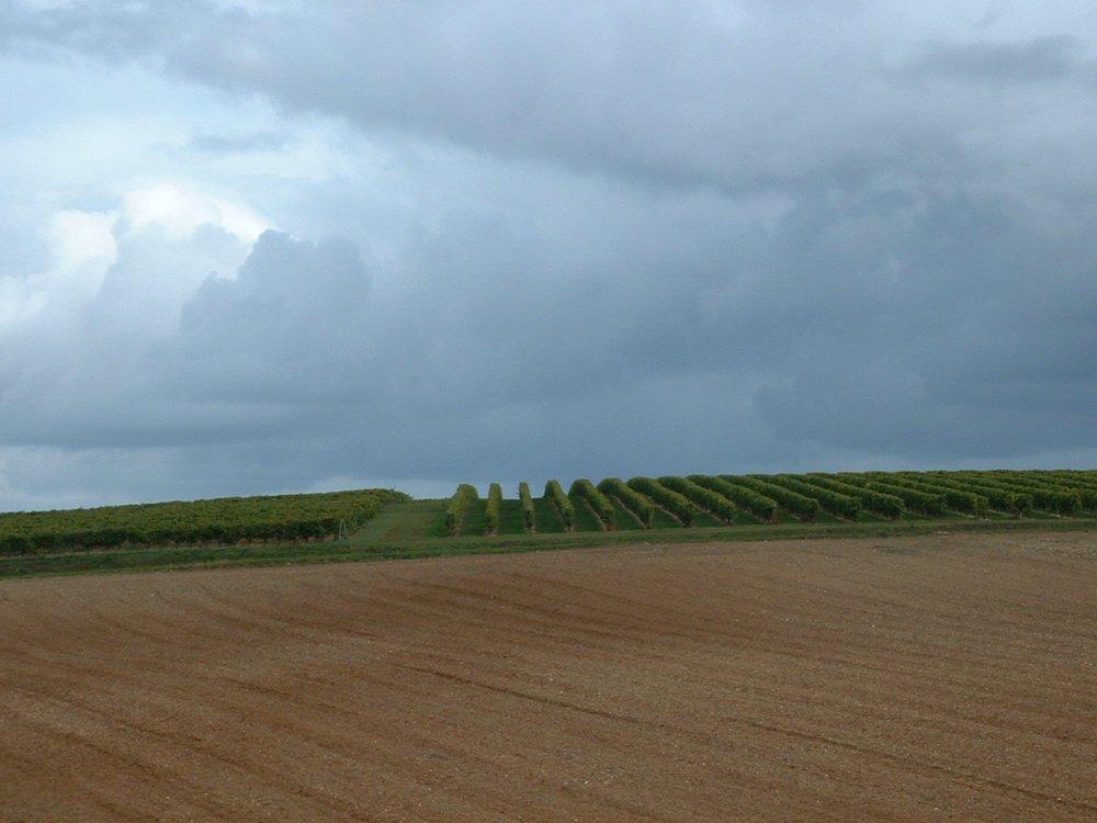 Vines 2008 (14).JPG