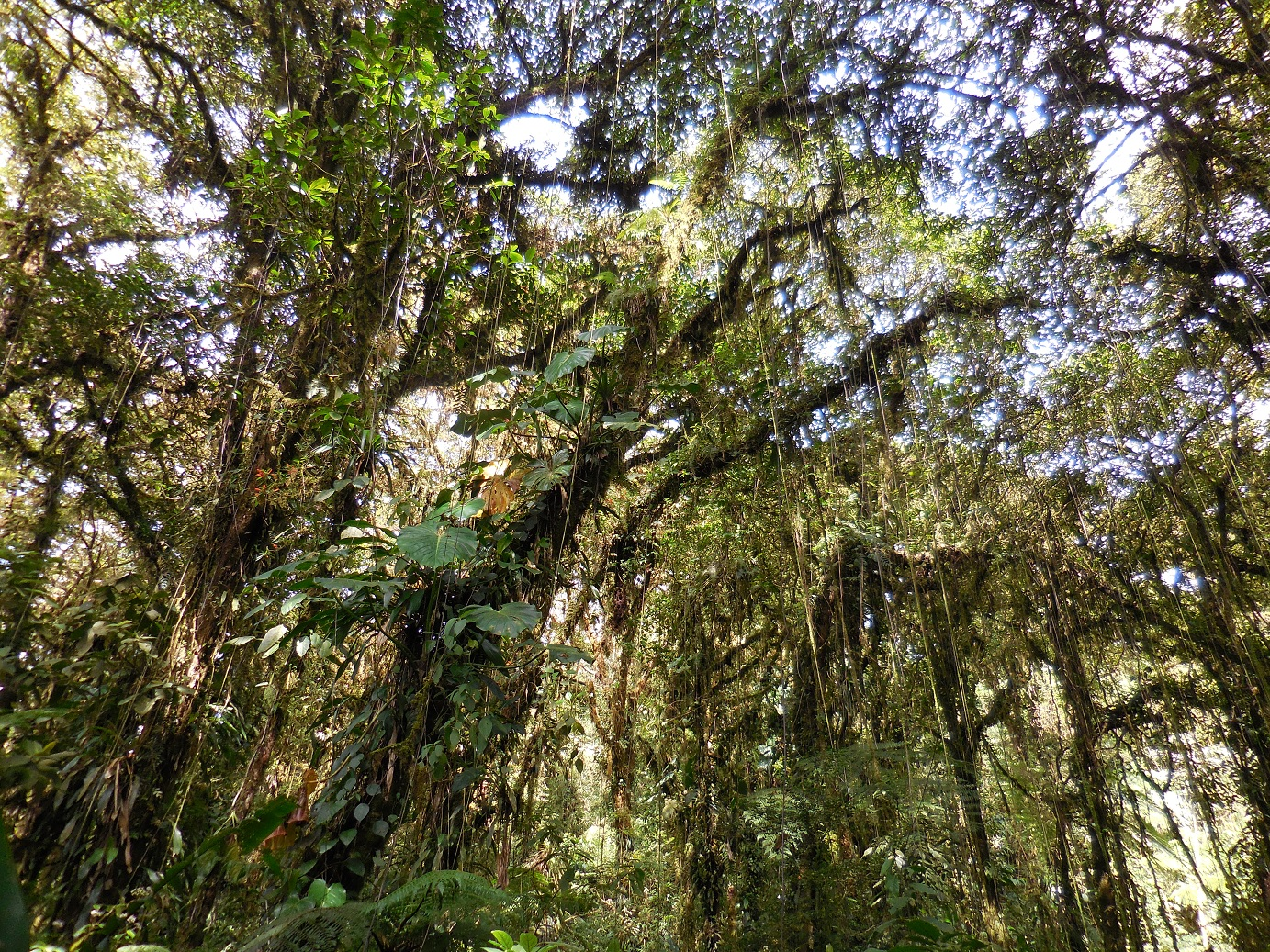 magic cloud forest
