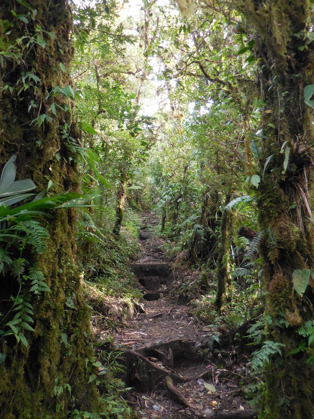 nice roots hike
