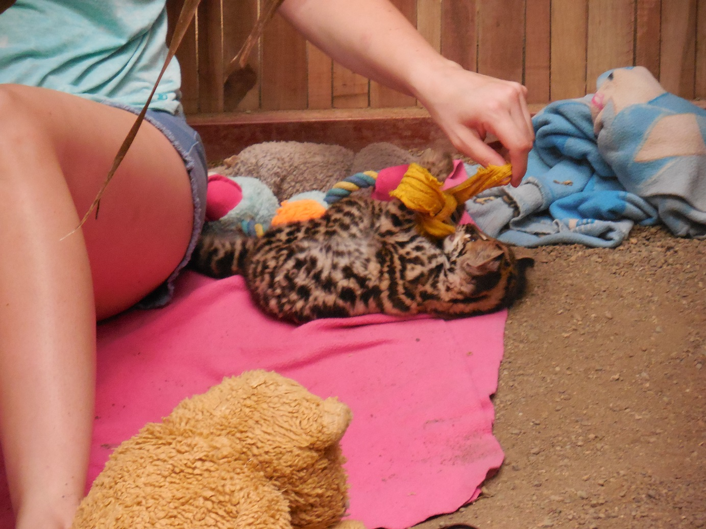 Jaguar Rescue Centre