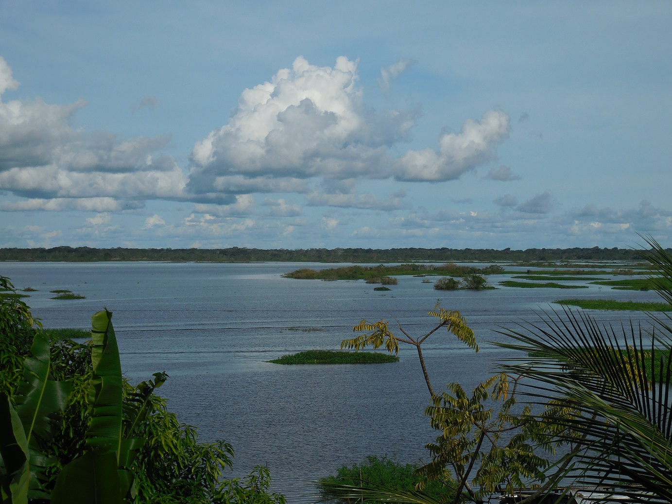 River by Iquitos