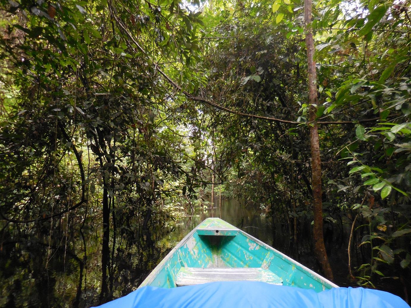 Short-cut Amazonian style