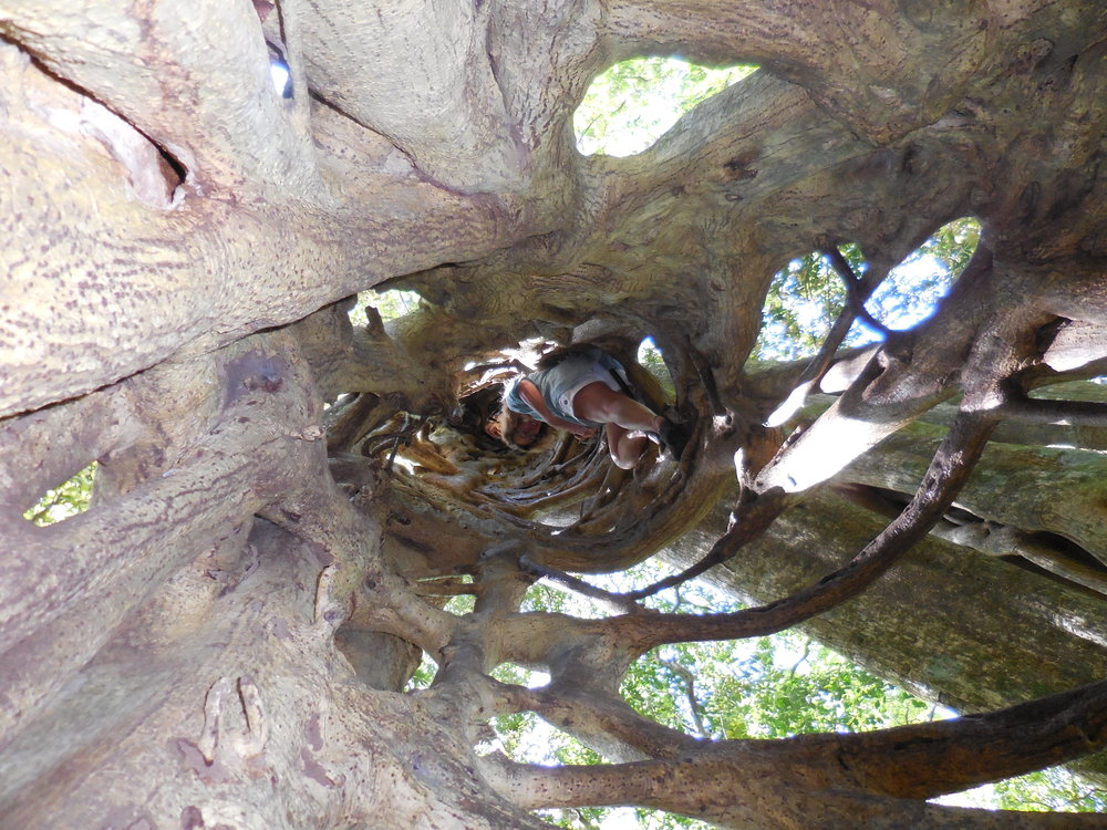 Inside hollow tree