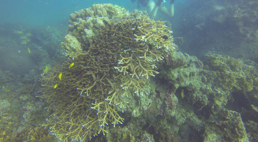 Ko Tao Diving
