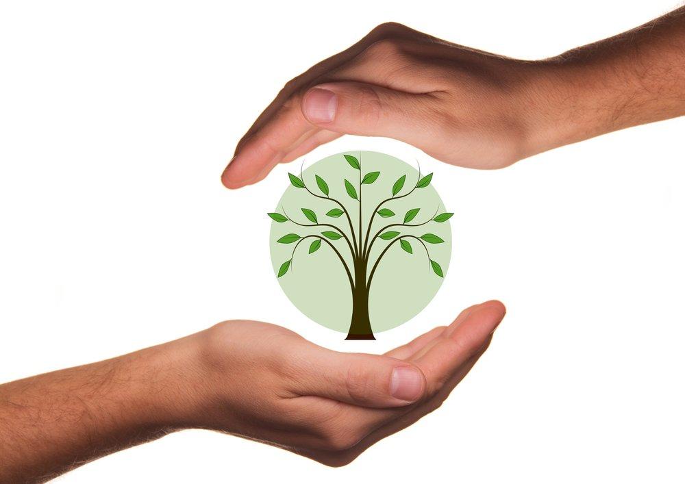 hand-tree-plant-leaf-environment-live-1334142-pxhere.com.jpg